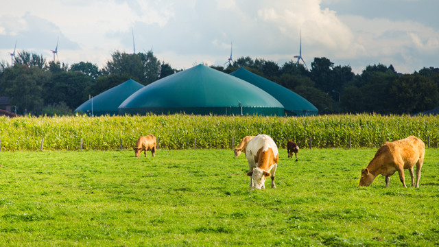 National Grid article '6 fascinating facts about biogas'