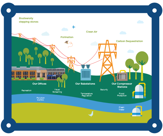Details of National Grid's biodiversity stepping stones